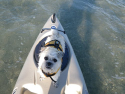 kayak-dog